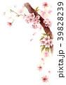 水彩で描いた桜の枝に咲く花 39828239