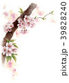 水彩で描いた桜の枝に咲く花 39828240