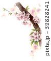 桜 花 ソメイヨシノのイラスト 39828241