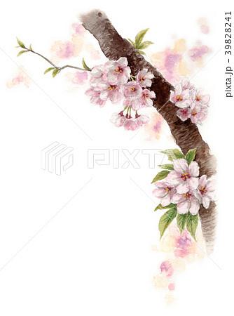 水彩で描いた桜の枝に咲く花 39828241