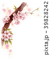 水彩で描いた桜の枝に咲く花 39828242