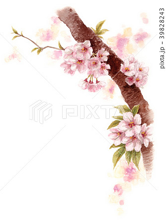 水彩で描いた桜の枝に咲く花 39828243