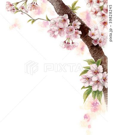 水彩で描いた桜の枝に咲く花 39828245