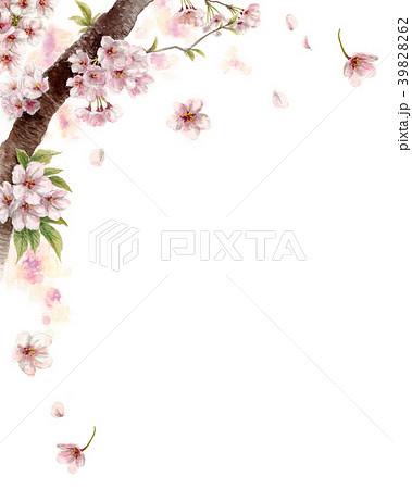 水彩で描いた桜の枝に咲く花 39828262