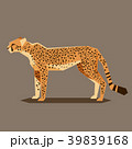 Flat geometric Cheetah 39839168