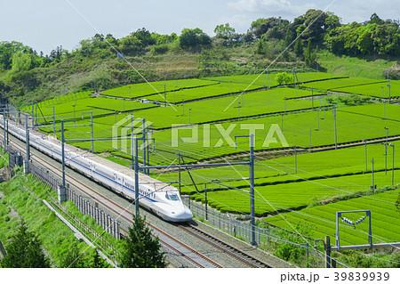 新緑の茶畑と新幹線 青空 39839939