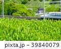 新緑の茶畑と新幹線 39840079