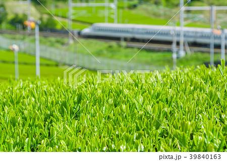 新緑の茶畑と新幹線 39840163