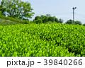 新緑の茶畑 39840266