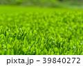 新緑の茶畑 39840272