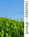 新緑の茶畑 青空 39840441