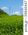 新緑の茶畑 青空 39840447