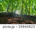 新緑 若葉 初夏の写真 39840625