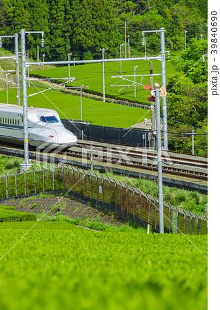 新緑の茶畑と新幹線 39840690