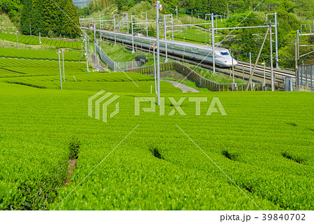 新緑の茶畑と新幹線 39840702