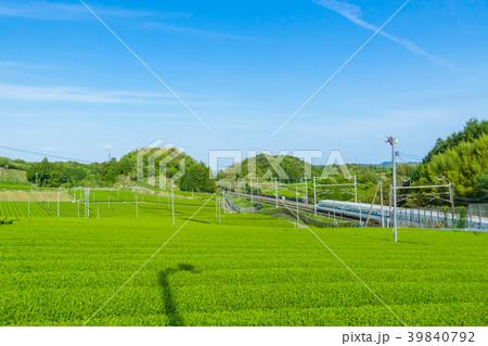 新緑の茶畑と新幹線 青空 39840792
