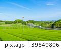 新緑の茶畑と新幹線 青空 39840806