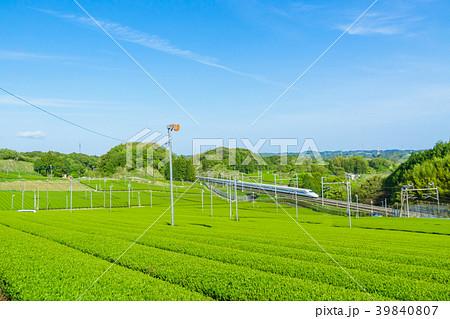 新緑の茶畑と新幹線 青空 39840807