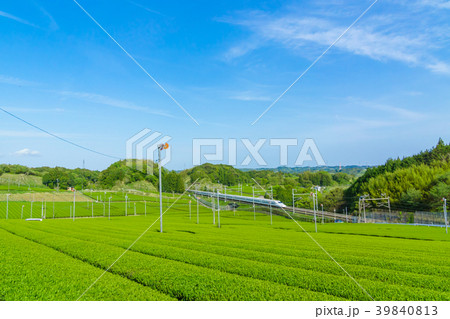 新緑の茶畑と新幹線 青空 39840813