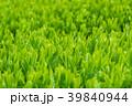 新緑の茶畑 39840944