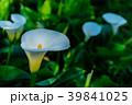 植物 工場 プランツの写真 39841025