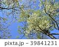 春 ツツジ 花の写真 39841231