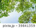 新緑 葉 春の写真 39841359