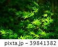 新緑 葉 春の写真 39841382