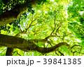 新緑 葉 春の写真 39841385