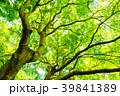 新緑 葉 春の写真 39841389