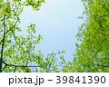新緑 葉 春の写真 39841390