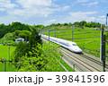 新緑の茶畑と新幹線 青空 39841596