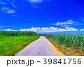 サトウキビ畑 道 宮古島の写真 39841756