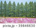 生駒高原 コスモス 花畑の写真 39846630