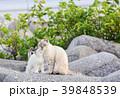 猫 野良猫 親子の写真 39848539