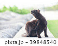 テトラポットの黒い野良猫 39848540