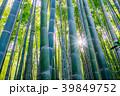 【神奈川県】竹林 39849752