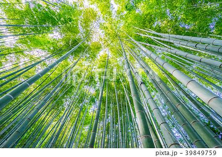 【神奈川県】竹林 39849759