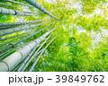 竹林 春 竹の写真 39849762