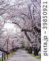 福島県郡山市民の憩いの場穴場人気スポット五百淵公園。春を満喫できる満開の桜のトンネルに大歓声 39850921