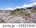 桜 陸郷 春の写真 39852946