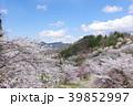 桜 陸郷 春の写真 39852997