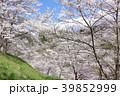 桜 陸郷 春の写真 39852999