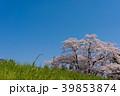 桜 39853874