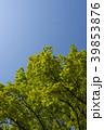 新緑 39853876