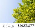 新緑 39853877