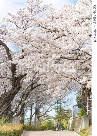 開成山公園「日本最古級のソメイヨシノ」明治11年1878年に植樹された ...