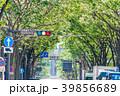 【神奈川県】並木道 39856689
