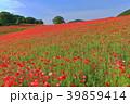 彩の国ふれあい牧場のポピー 39859414