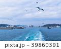 久里浜港とカモメ 39860391